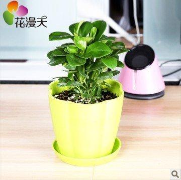 Amazon Com Office Desk Flowers Small Potted Plants Bonsai Plants