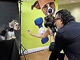 Lionel Falcon Pet Photographer