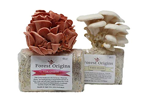 Pink and White Oyster Mushroom Growing Kit Bundle - All in One Indoor Grow Kit- Top Gardening Gift, Holiday Gift, Unique Gift - Mother's Day Gift - Oyster Mushroom Growing