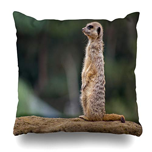 Darkchocl Daily Decoration Throw Pillow Covers Meerkat Lookout Duty Square Pillowcase Cushion for Couch Sofa or Bed Modern Quality Design Cotton and Polyester 18