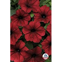 Petunia-Spreading Tidal Wave Velour Red 100 seeds
