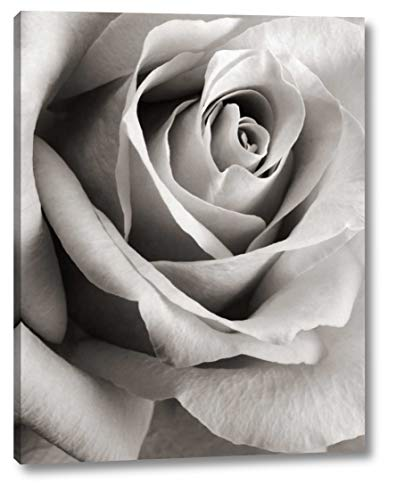 """Rose by Steven N. Meyers - 26"""" x 33"""" Gallery Wrapped Giclee Canvas Print - Ready to Hang"""