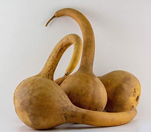 Dipper Gourd Craft Ready (3 Dipper Gourds) from Gourdaments