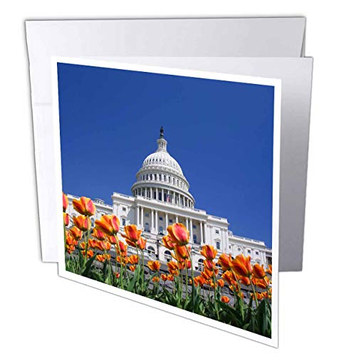 3dRose Danita Delimont - Washington DC - USA, Washington DC. US Capitol Building with Tulips - 1 Greeting Card with Envelope ()