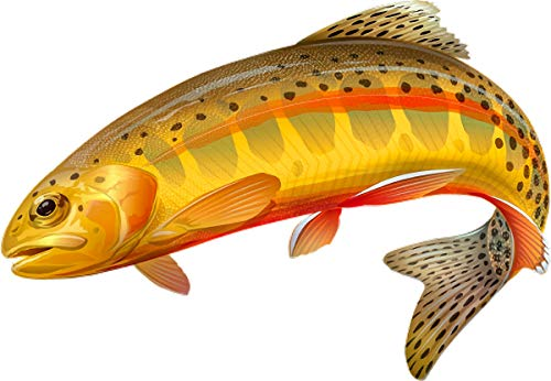 avgrafx 3m Golden Trout Fish Fishing Color Decal 6x5.5 Laminated Car Boat Camper RV Truck