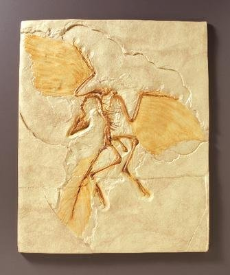 546242 - Archaeopteryx Fossil Reproduction - Archaeopteryx Fossil Reproduction - Each