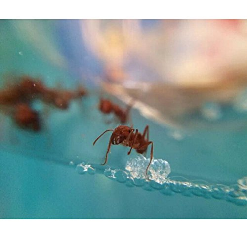 Forin Ant Nursery Castle Farm Maze with Feeding System Live Ant Viewing Habitat Big Size Color Blue Photo #2