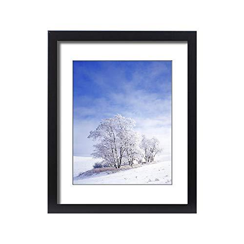 Framed 20x16 Print of USA, Washington, Palouse Area, Frosted Black Locust Trees (11186857)