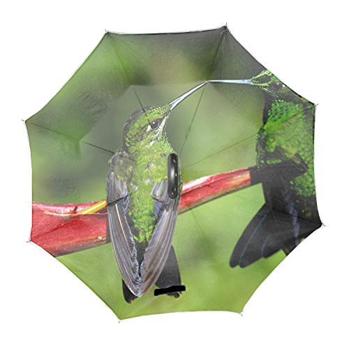 Green Colibri Bird Couple Double Layer Inverted Umbrella with C-Shaped Handle, Anti-UV Waterproof Windproof Straight Umbrella for Car Rain Outdoor Use