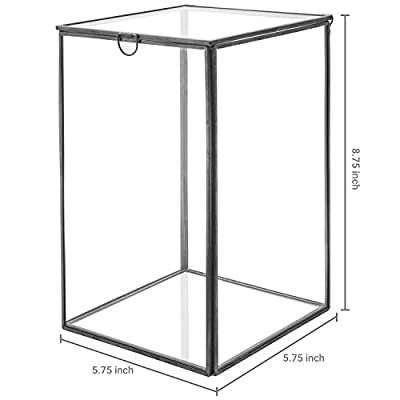 MyGift Clear Glass Plant Terrarium with Black Metal Frame, Tabletop Curio Case/Shadow Box: Home & Kitchen