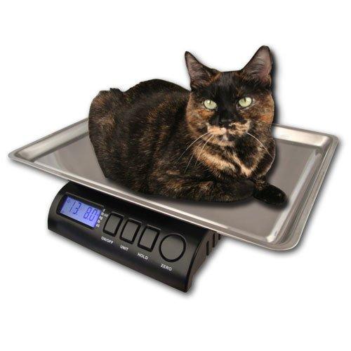 ZIEIS | 30 Lb. Capacity | Medium Pet Series - Digital Cat Scale | Z30P-SST | BigTop (15