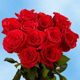 Valentines Day Charlotte Red Roses
