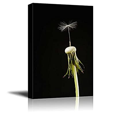 Canvas Prints Wall Art - Dandelion Head with a Single Seed on Black Background | Modern Wall Decor/Home Decoration Stretched Gallery Canvas Wrap Giclee Print. Ready to Hang - 24