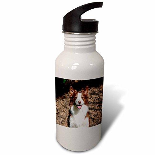 Border Collie Portrait (3dRose Danita Delimont - Dogs - Portrait of a Border Collie, MR - Flip Straw 21oz Water Bottle (wb_258123_2))