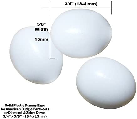 DummyEggs Stop Egg Laying! Fake Bird Eggs: Am Budgie Parakeet (Budgerigar  Budgy) Parrotlet or Diamond Dove  White Solid Plastic Realistic 3/4