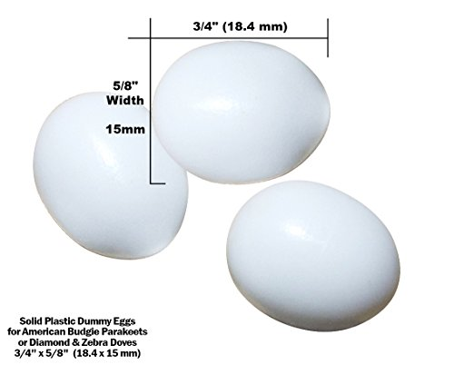 Dummy Eggs - Fake Bird Eggs for American Budgie Parakeet (Budgerigar) and Diamond Dove, Zebra Dove. White Solid Plastic Realistic Shape - 3/4 inch long x 5/8 inch wide (18.4 x 15 mm) (Set of 3)
