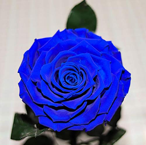 sexyrobot Beauty And The Beast Rose, Handmade Preserved Fresh Flower Real Rose with Fallen Petals in a Glass, with Exquisite Box for Valentine's Day, Mother's Day, Christmas (Blue) by sexyrobot (Image #3)