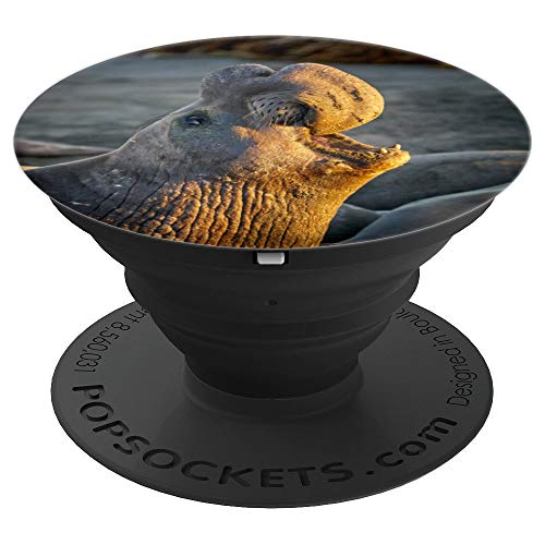 - Elephant Seal at Dawn Photo - PopSockets Grip and Stand for Phones and Tablets