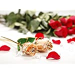 DEFAITH-Real-Rose-24K-Gold-Dipped-Forever-Gifts-for-Her-Valentines-Day-Anniversary-Wedding-and-Proposal-Attractive-Luster-and-Natural-Shape-Champagne-Gold-with-Moon-Stand