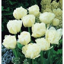 Cottage Garden Bulbs: