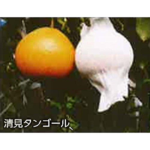 【1725枚】 果実袋 サンテ S-10 24cm 白 ミカンの日焼防止着色促進樹上越冬など 石川殖産 代不 B075L8FJWY