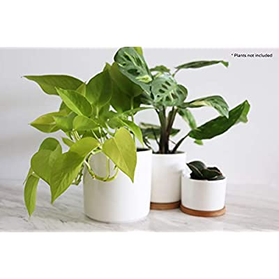 Crazy Plant Guy | 3 Piece Planter Set | Simple and Modern Plant Pots with Drainage Hole and Bamboo Saucers : Industrial & Scientific