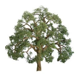 JTT96043 Professional Tree, Live Oak