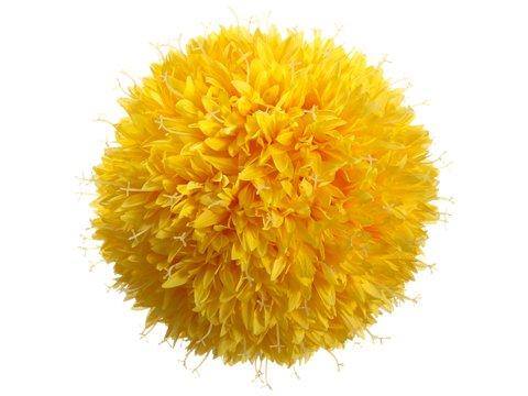 10-Allium-Kissing-Ball-Yellow