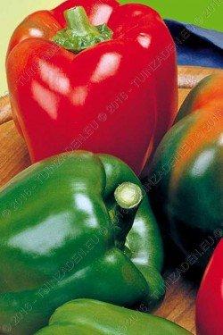 Yolo Wonder Pepper Seeds (Organic-Non-gmo) 200 Seeds Upc 647923989502