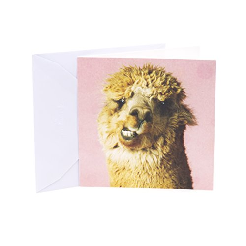 Hallmark Studio Ink Birthday Greeting Card (Alpaca)
