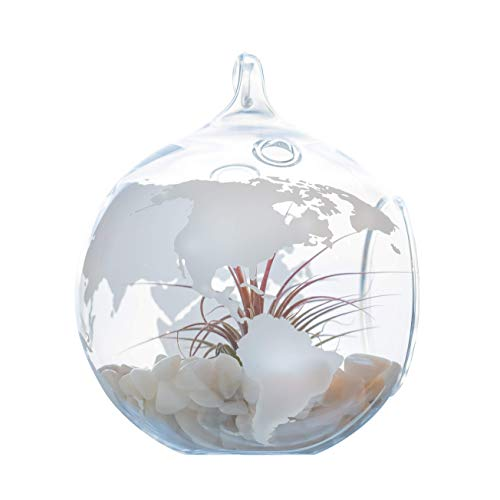 World Map Terrarium – Glass Globe for Succulents & Air Plants – Hanging Planter for Travelers – Great Gift Idea (5 inch…