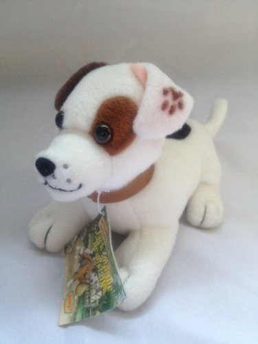 Talking Wishbone the Jack Russell Terrier Dog - Denny Promo (Big Jack Russell Terrier)