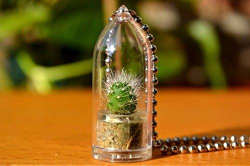 snow-white-cactus-live-plant-necklace-cactus-terrarium-gift