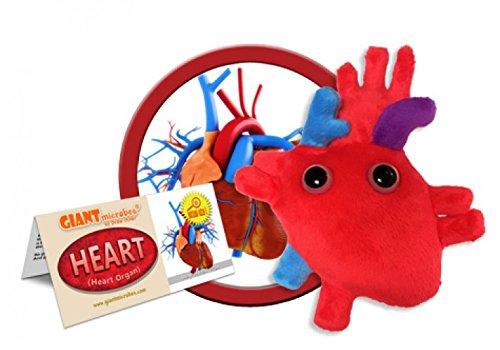 GIANTmicrobes - Heart (Heart Organ)]()