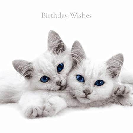Birthday Wishes Cats Eyes Card