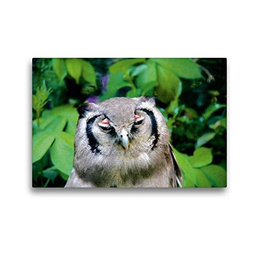 CALVENDO Toile de qualité supérieure 45 x 30 cm, Motif hiboux et Courses   Tableau Mural, Image sur Toile, Toile imprimée sur Toile, Impression sur Toile Natur Nature