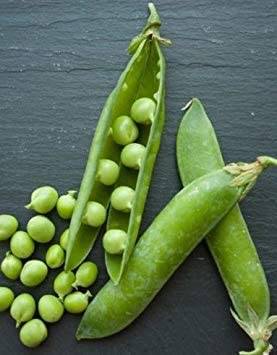 VISA STORE Fresco guisante flujo azúcar ap 50 semillas Pisum ...