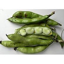 BEAN, FAVA WINDSOR BUSH, HEIRLOOM, ORGANIC 20+ SEEDS, NON-GMO, BUTTERY N HEALTY BEANS