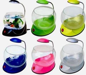 Bettas table desktop aquarium small mini fish for Mini fish bowls