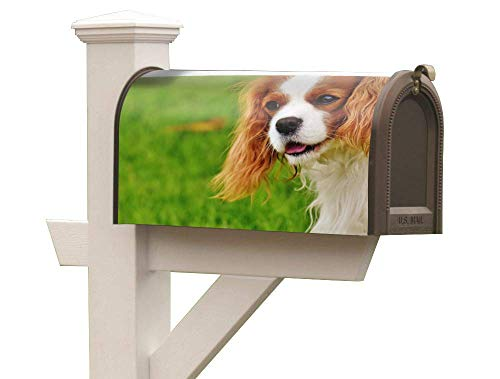 KR. LIF Flexible Magnetic Rubber Magnetic Mailbox Wrap Decorative Vivid Designs Mailbox Vertical Sign The Cavalier King Charles Spaniel fit Steel mailboxes 6.5