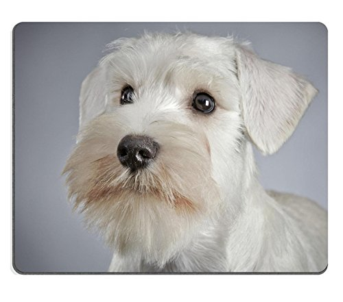 Liili Mouse Pad Natural Rubber Mousepad white miniature schnauzer puppy 3 month old Image ID 22623457
