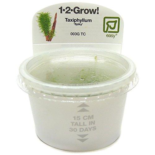 Tropica Taxiphyllum sp. 'Spiky' Live Aquarium Moss - In Vitro Tissue Culture 1-2-Grow!