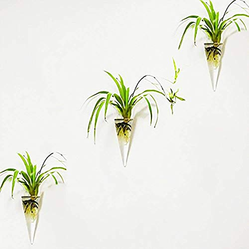 Mkono 2 Pack Wall Hanging Vase Glass Flower Plant Terrarium Planters, Cone