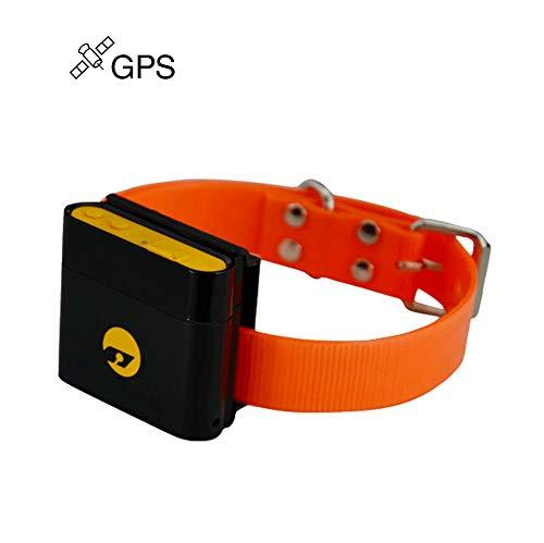ZYWX GPS Mini Magnética Impermeable Gato, Perro Localizador para El Coche/Viejo Hombre/Mascota con Cuello