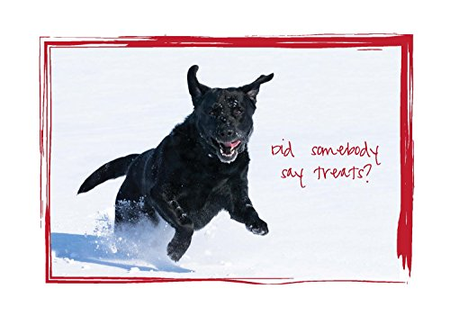 Christmas Treats - Black Lab Christmas Cards