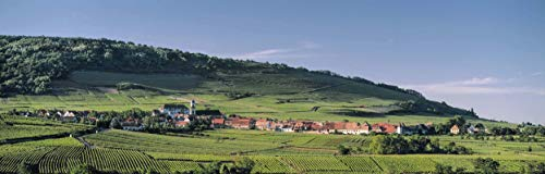 France, Photography, Alsace, Saint Hyppolite, Vosges Mountains, vineyards, wine, grapes, Panoramic image, landscape, Europe, Art Print, Wall Art, Gift, Decor, Photo, sizes up to 17x50 -