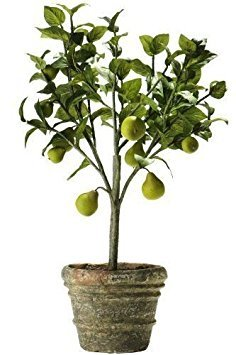 25 Dwarf Bartlett Pear Seeds  Pyrus Communis