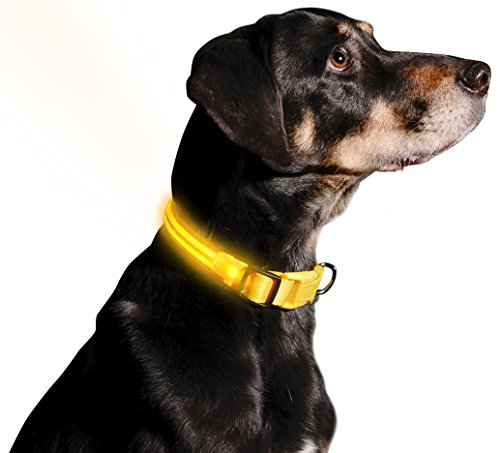 Picture of LED Dog Collar - USB Rechargeable - Available in 6 Colors & 6 Sizes - Makes Your Dog Visible, Safe & Seen