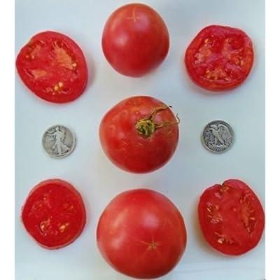 Arkansas Traveler - Organic Heirloom Tomato Seed - The Perfect Slicer - 40 Seeds : Garden & Outdoor