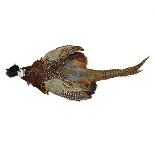 (Full Ringneck Pheasant Skin Pelt Head Wings Tail Feathers Genuine Natural Taxidermy)